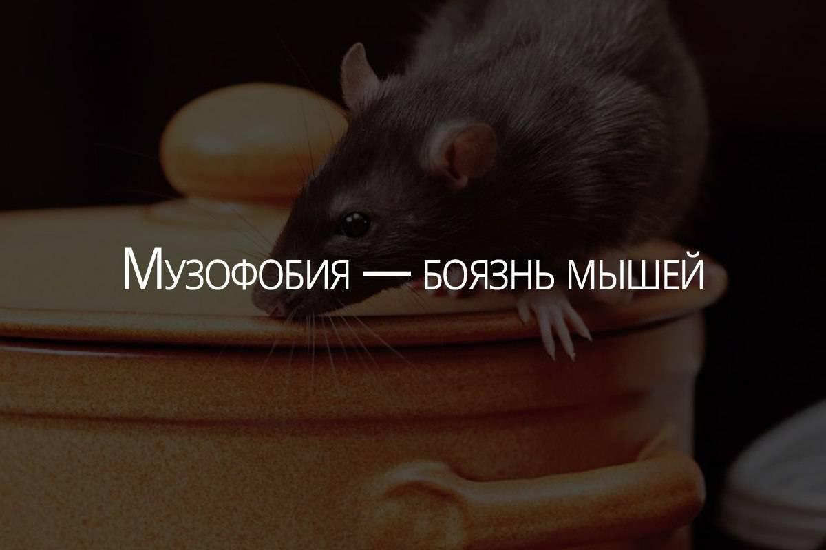 Как называется боязнь мышей фобия