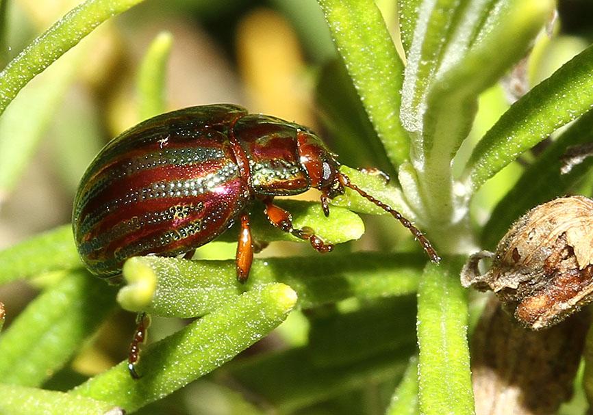 Как избавиться от мучного жука: плюсы и минусы вымораживания, просеивания, прогрева, применения химикатов, помогает ли удаление зараженных продуктов, какие меры профилактики на самом деле действенны