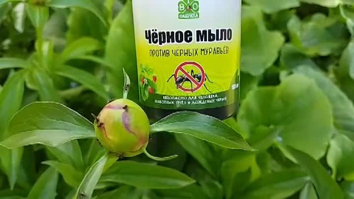 Как избавиться от тли на плодовых деревьях: химические препараты и народные средства, отзывы