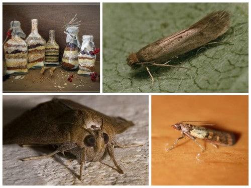 Кто такая фруктовая моль? описание насекомого и меры борьбы