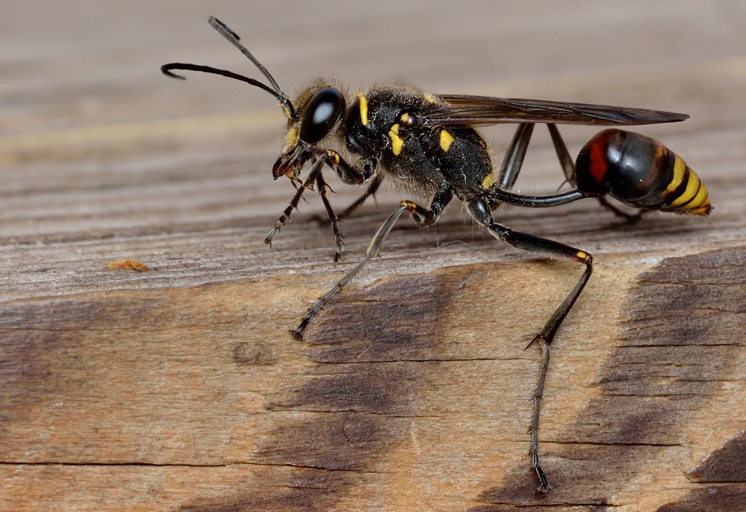 Осы главные насекомые убийцы