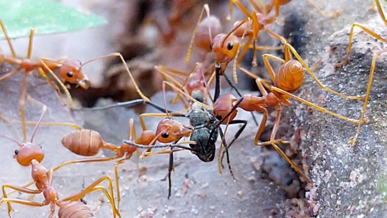 Интересные факты о муравьях - 24сми