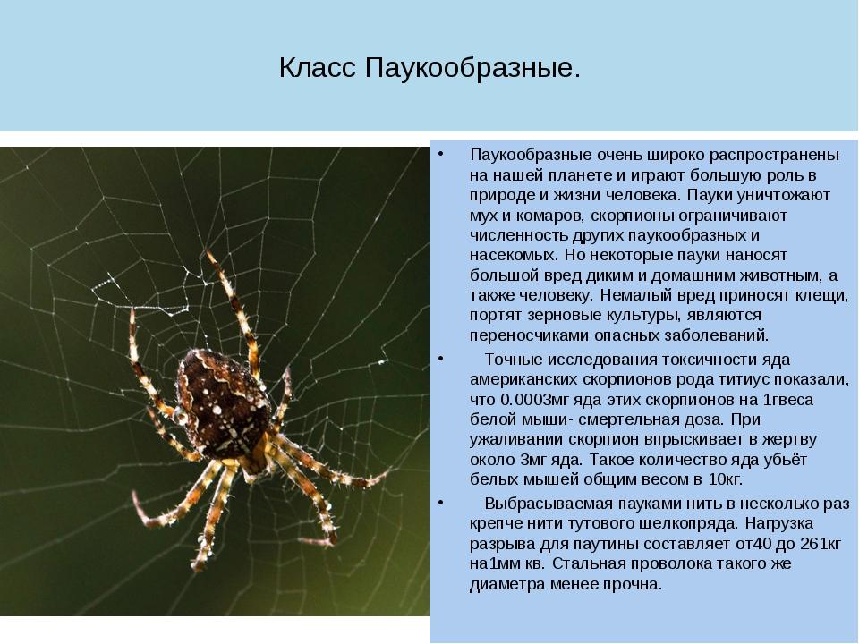 Чем полезны пауки и какая от них польза для человека и для природы?
