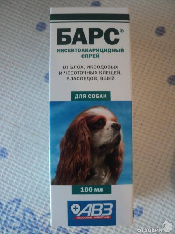 Средства от блох для собак: аптечные и народные