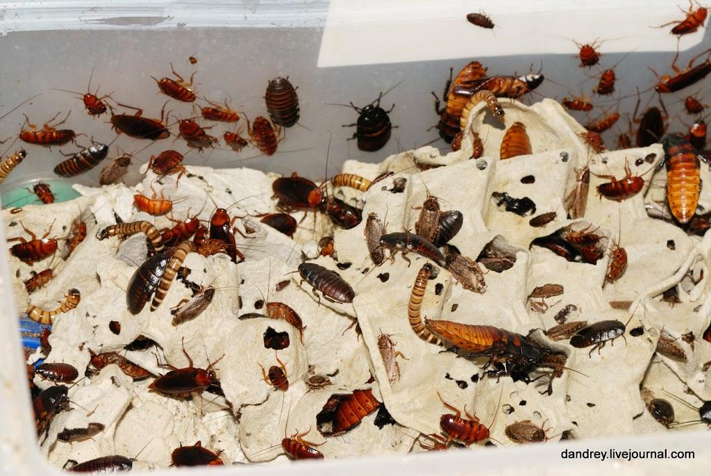 Естественные враги тараканов - птицы, насекомые и животные