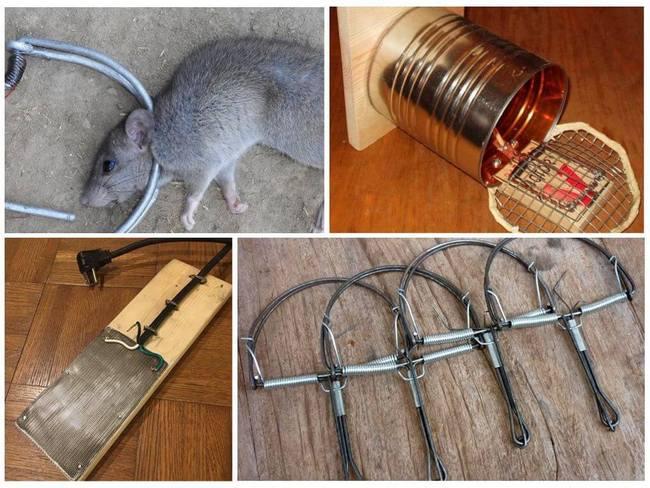 Создание эффективных крысоловок своими руками в домашних условиях
