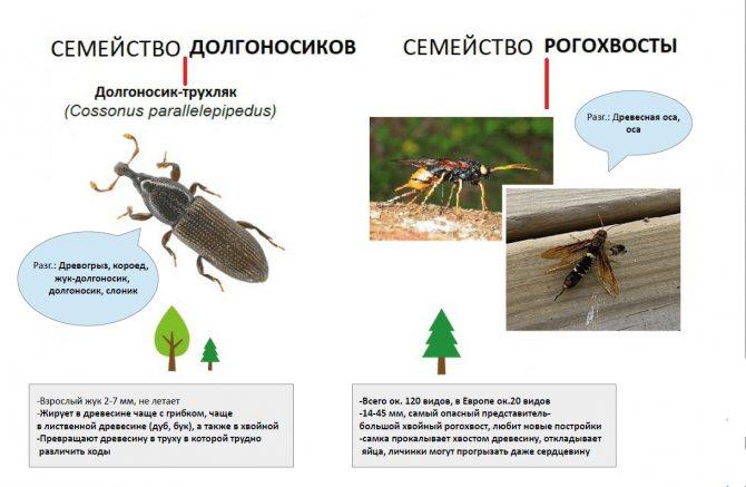 Древесный жук: признаки появления, борьба и профилактика