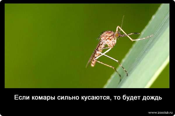 27 интересных фактов о комарах