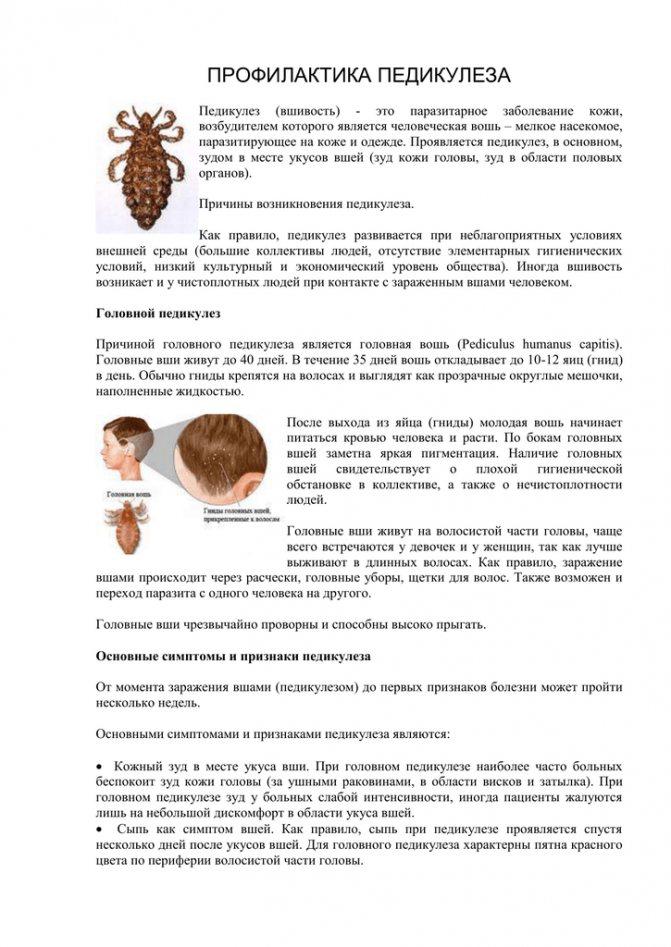 Когда социум во вред — вши у ребенка: причины, симптомы и фото детского педикулеза