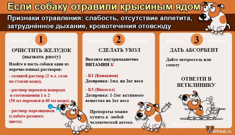 Что делать, если отравили собаку: первая помощь, признаки отравления, симптомы, лечение