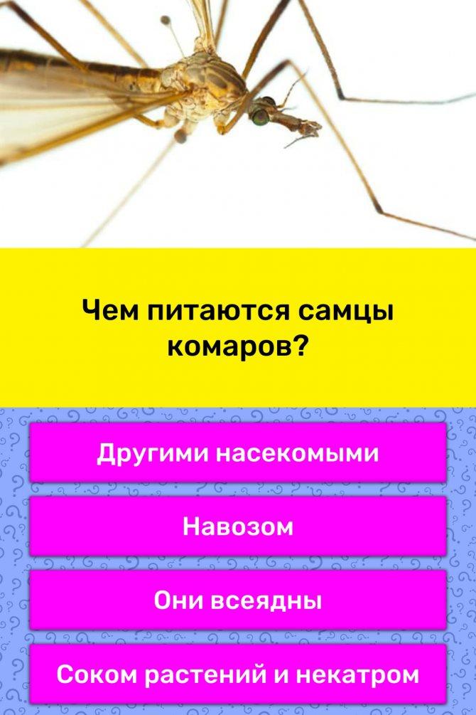 Чем самка комара отличается от самца | в чем разница