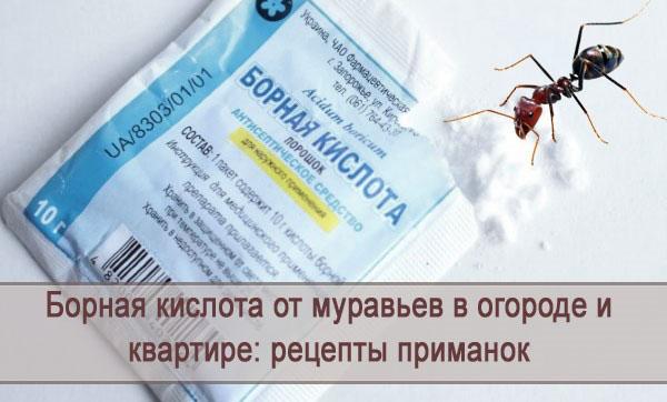 Борная кислота от муравьев: в огороде, в доме, в квартире, рецепты