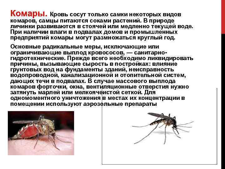 Сколько живут комары, как размножаются, сколько у них ног, какие виды бывают?