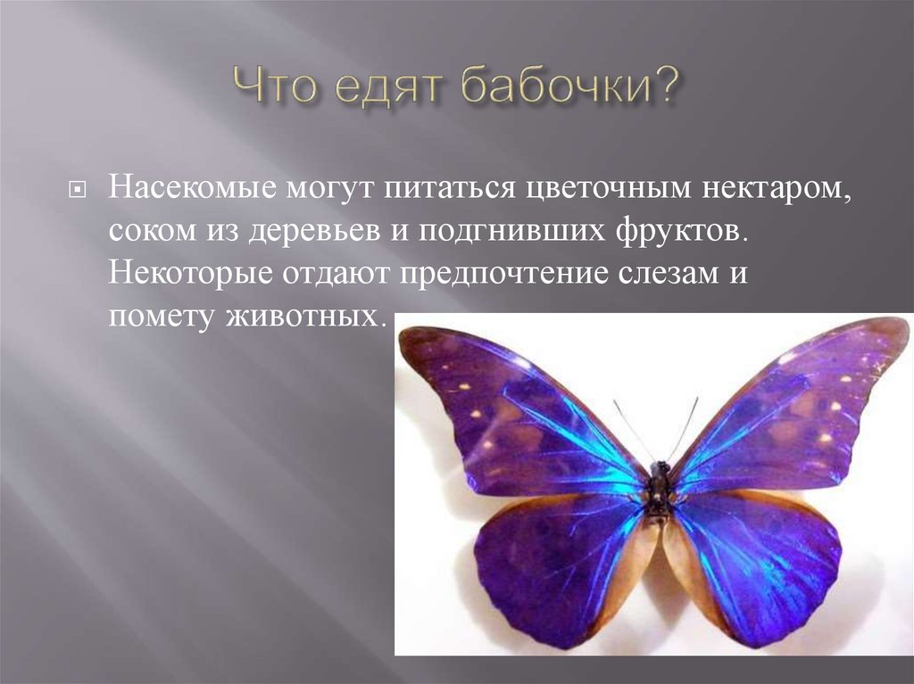 Описание внешнего вида, питание и размножение бабочки павлиний глаз