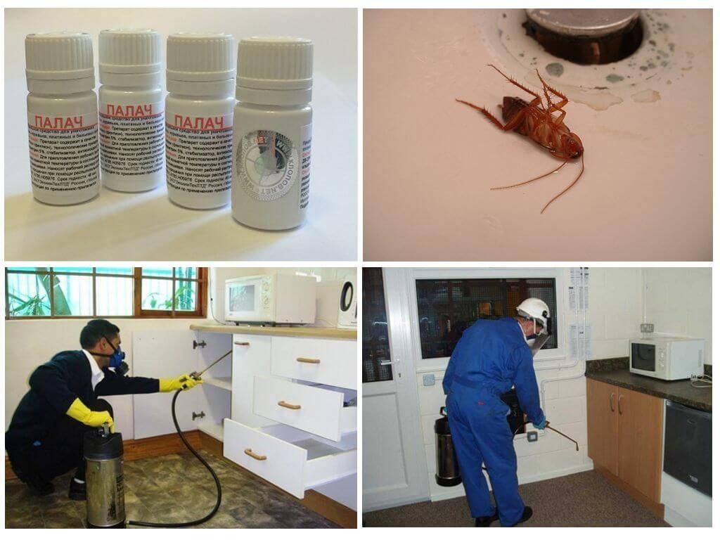 Меры профилактики против появления тараканов в квартире