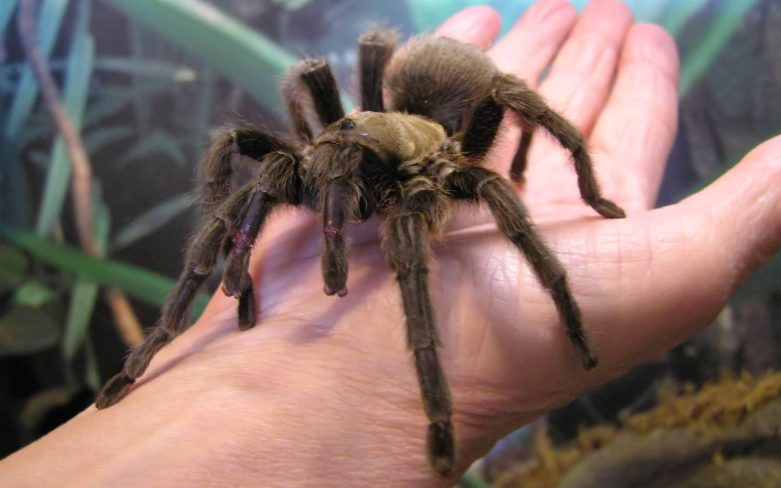Самые страшные пауки в мире: 10 фотографий жутких членистоногих
