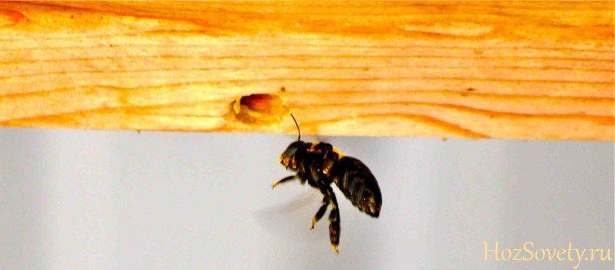Как избавиться от пчел в стене деревянного дома