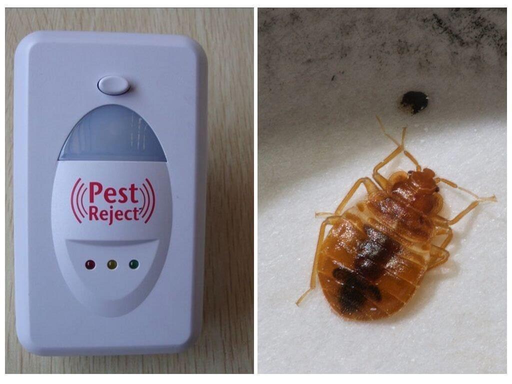 Чего боятся тараканы в квартире, какой запах не любят и почему не выносят света