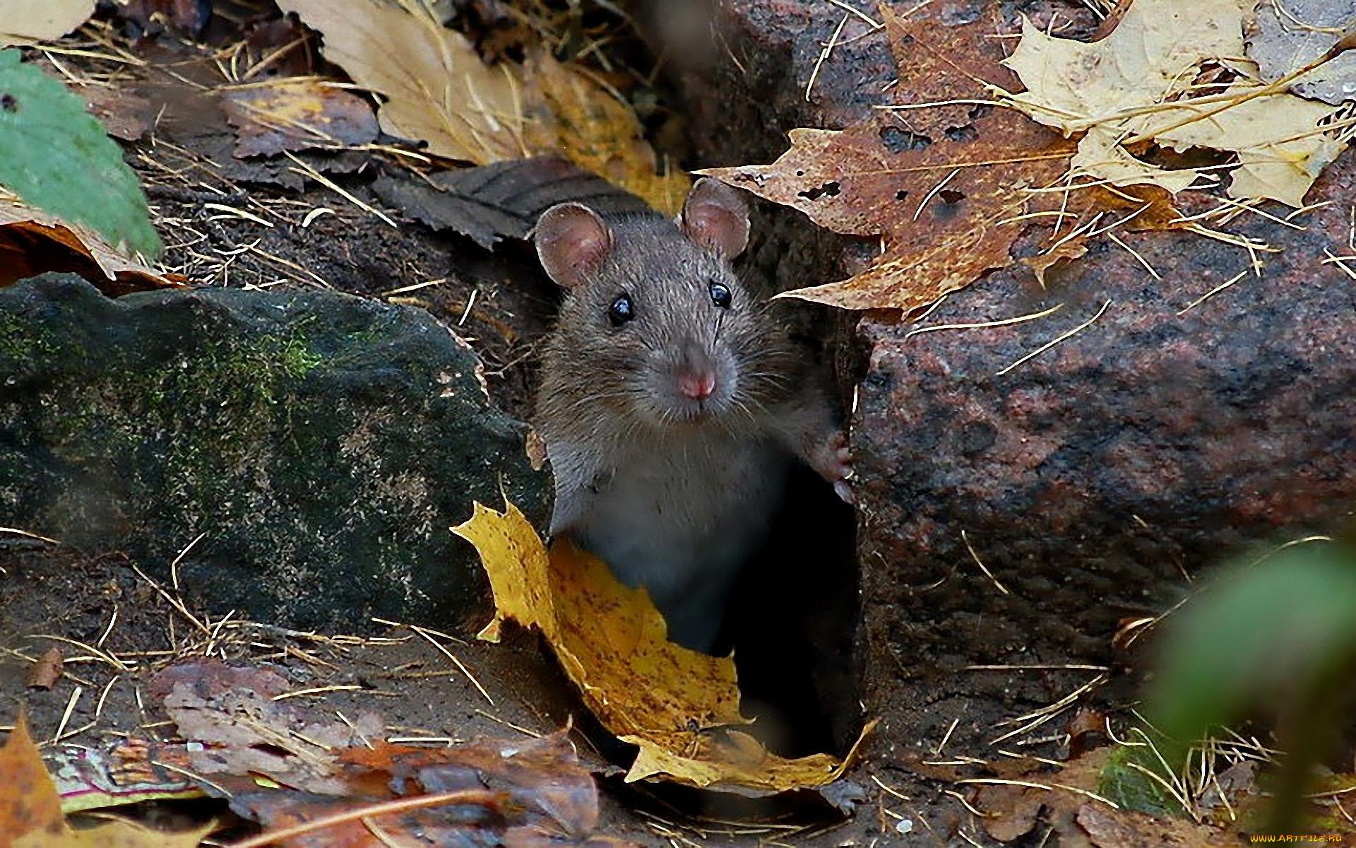 Среда обитания летучей мыши: где живет, приспособленность русский фермер