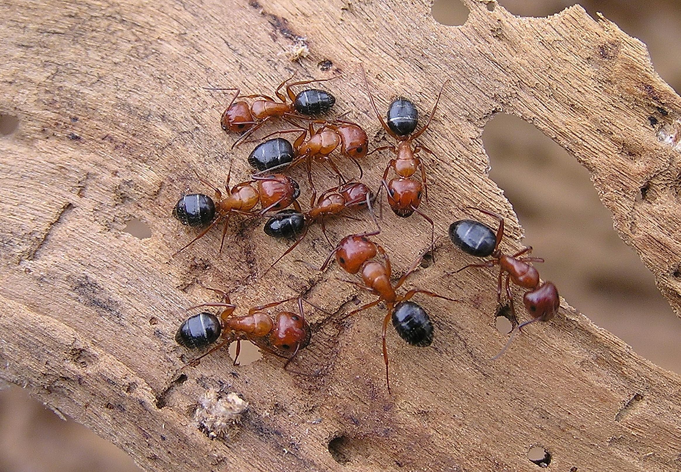 Как избавиться от муравьев в доме: лучшие народные и химические средства