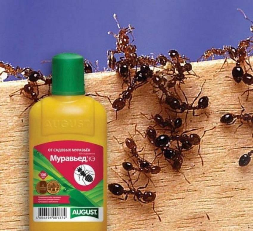 Борьба с муравьями. как вывести муравьев в саду и в квартире