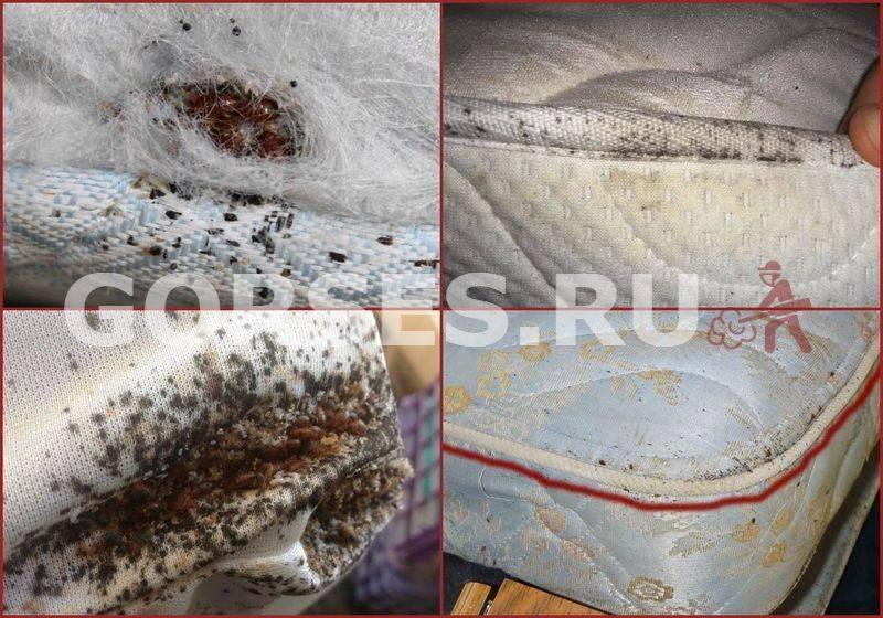 ❹ 4 шага избавления от клопов в матрасе в домашних условиях самостоятельно