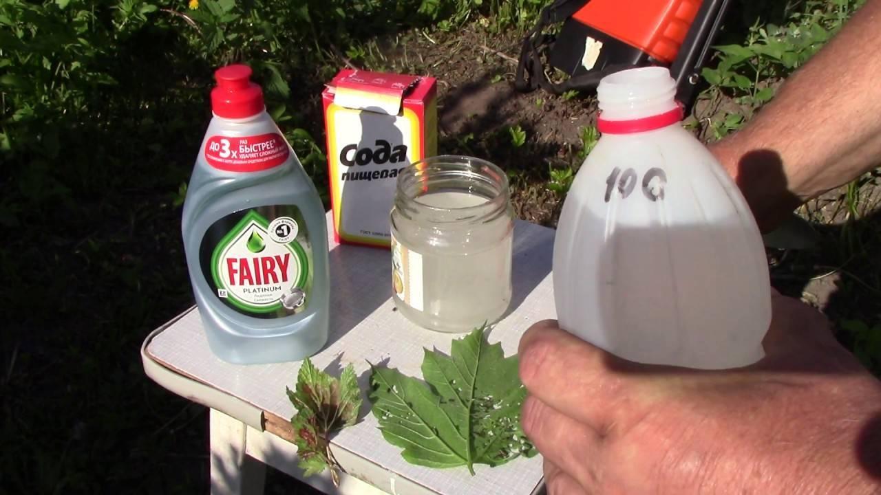 Нашатырный спирт от тли - как применять на разных растениях