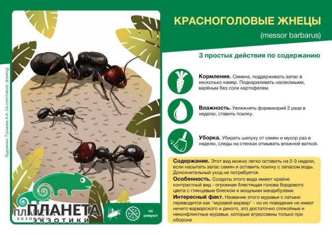 Подготовка муравьев к зиме: утепление муравейника, пищевые запасы