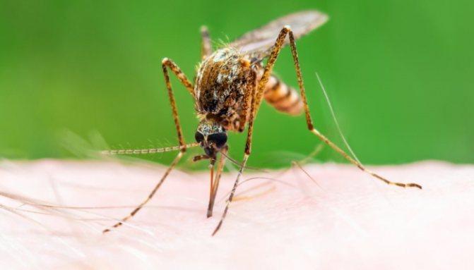 До какого этажа может добраться комар?  - «как и почему»