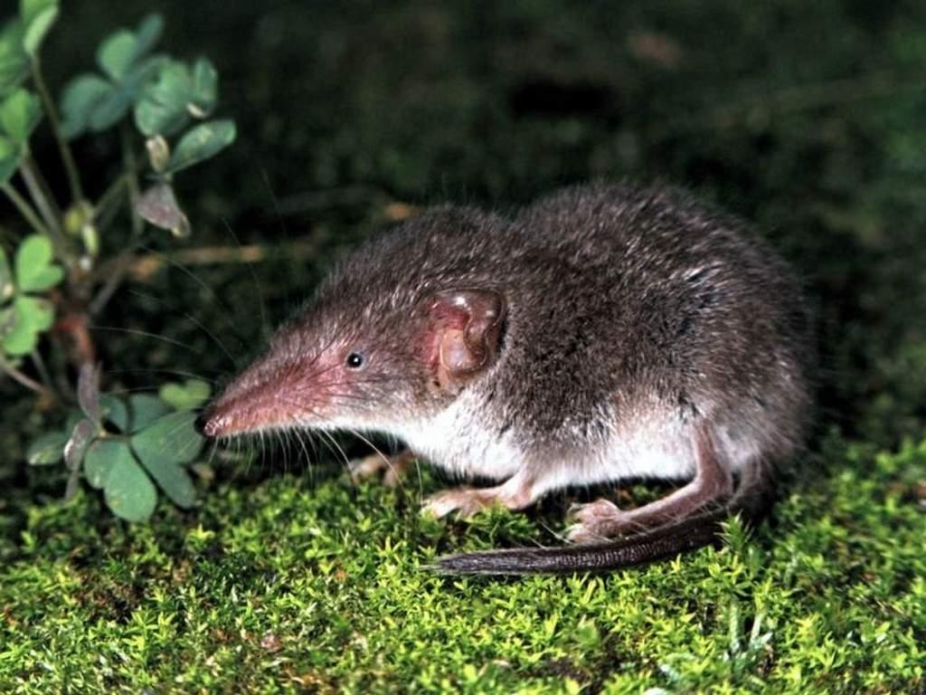 Мышь домашняя — виды, места обитания, виды и внешние характеристики зверька (125 фото и видео)