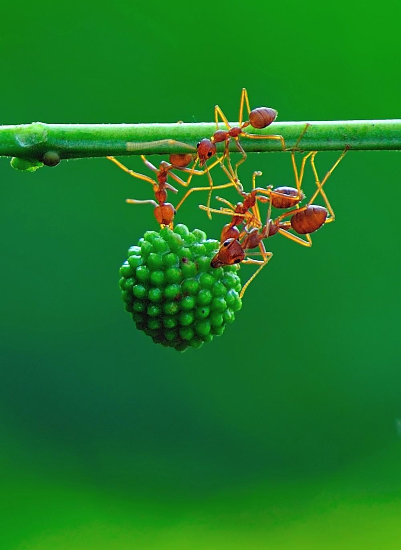 10 самых невероятных муравьев на земле - удивительный мир животных