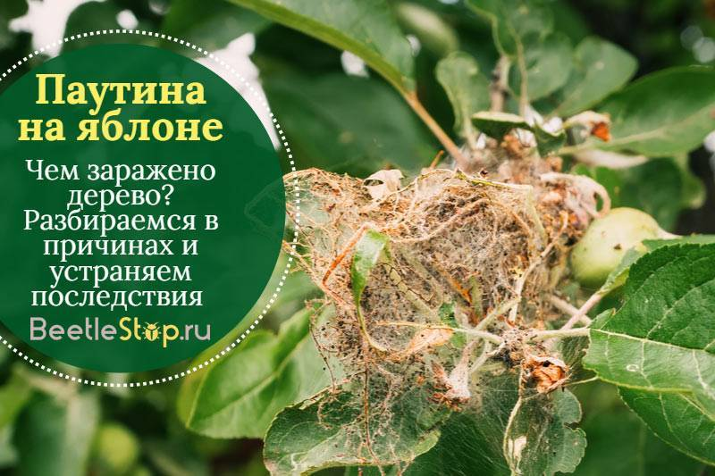 Как бороться с яблоневой молью