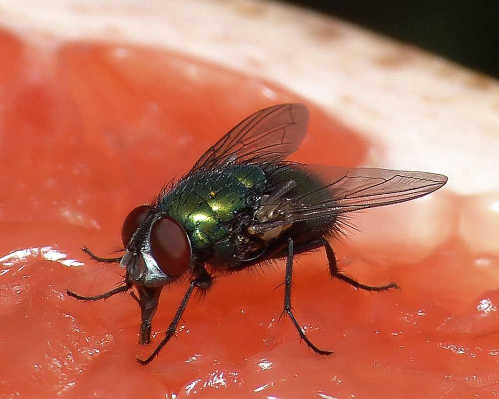 Строение и особенности работы ротового аппарата жуков, разнообразие типов ротовых аппаратов у насекомых