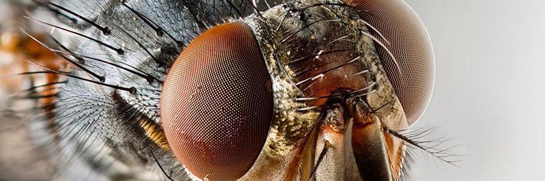 Как видит муха? подробно о данном вопросе