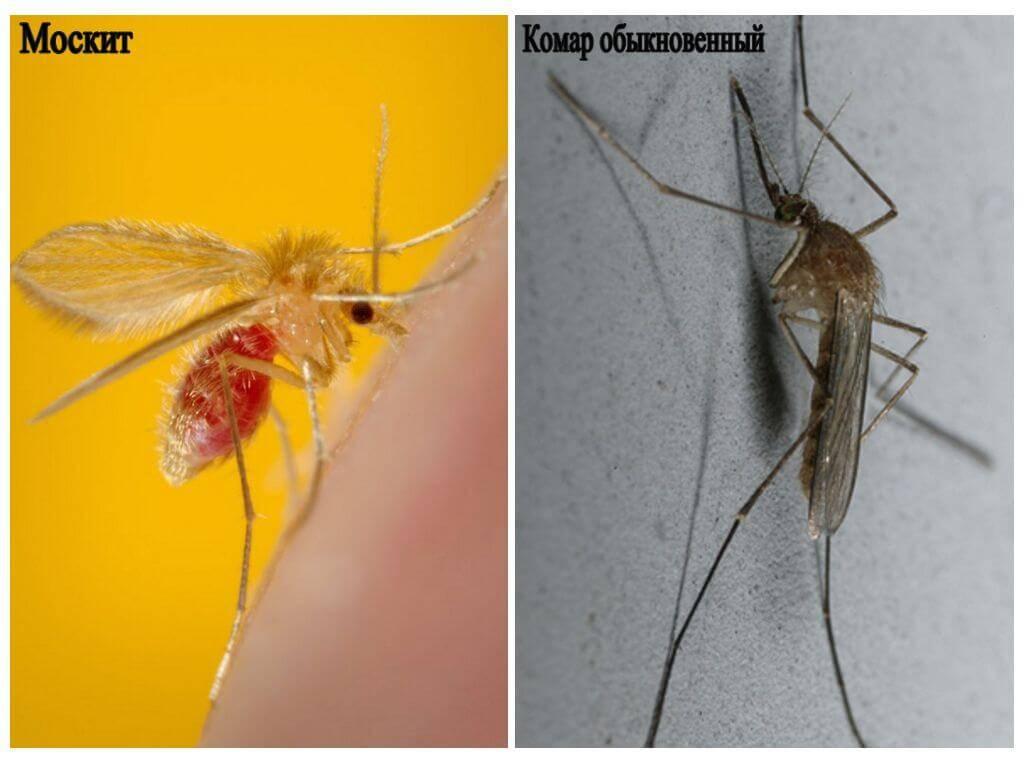 Осторожно: малярийный комар