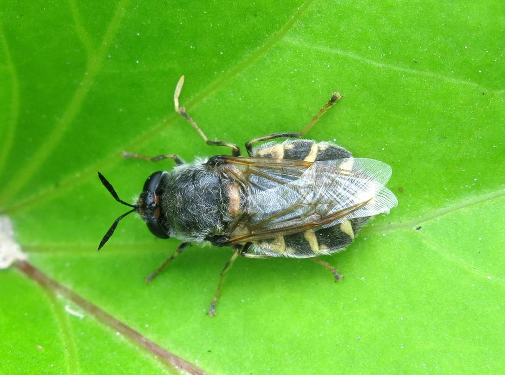Капустная муха — методы борьбы
