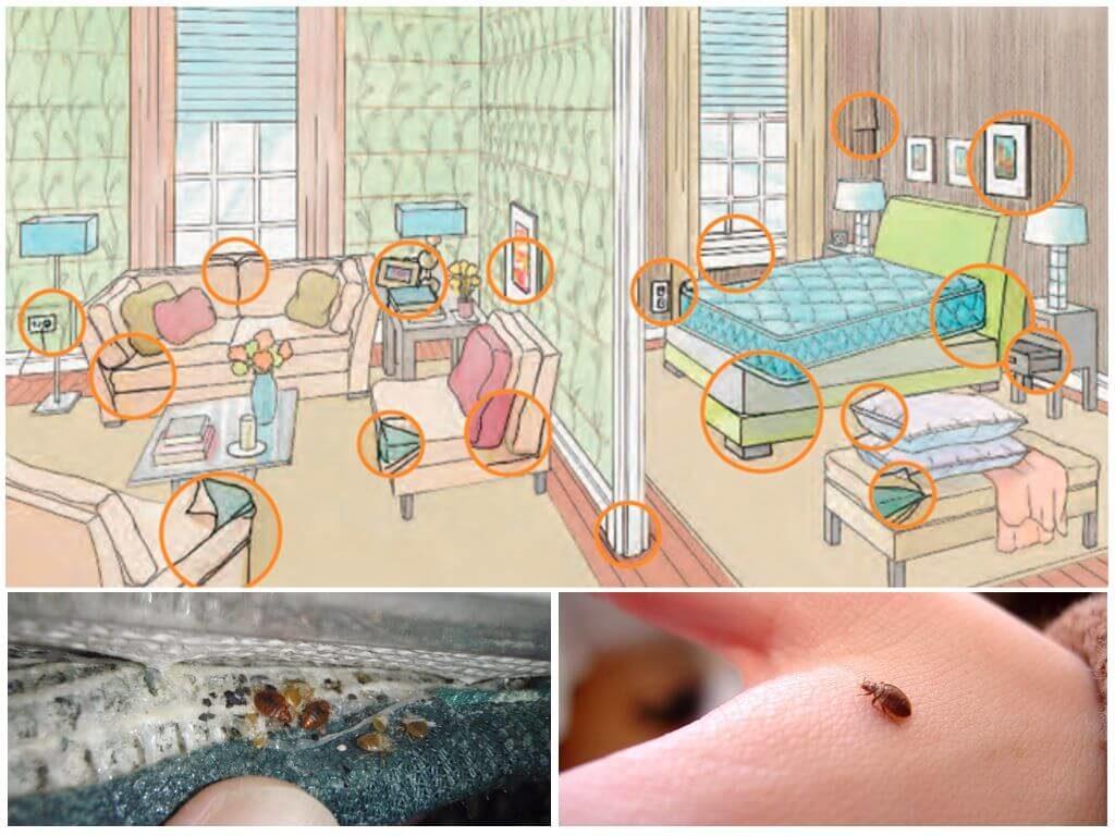 Как избавиться от диванных клопов навсегда в домашних условиях