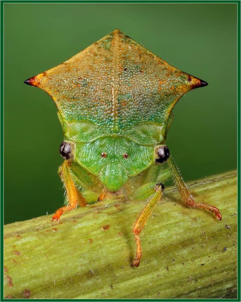 О вредоносности и мерах борьбы с американской белой бабочкой :: это важно :: krd.ru