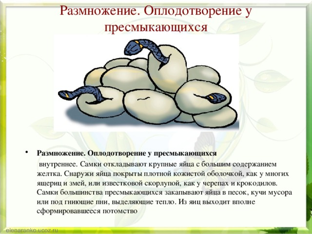 Яйца тараканов: размножение и способы уничтожения