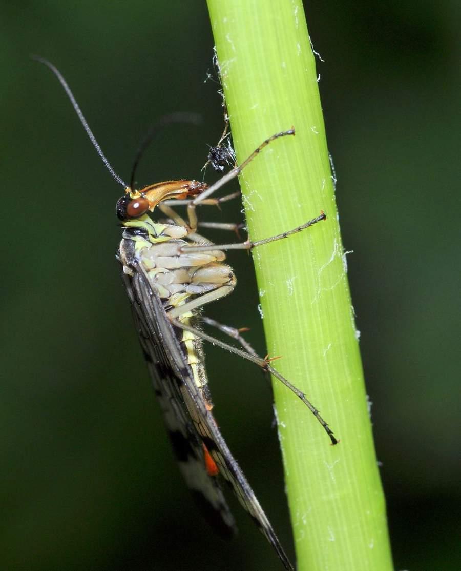 Редкие и удивительные насекомые нашей планеты