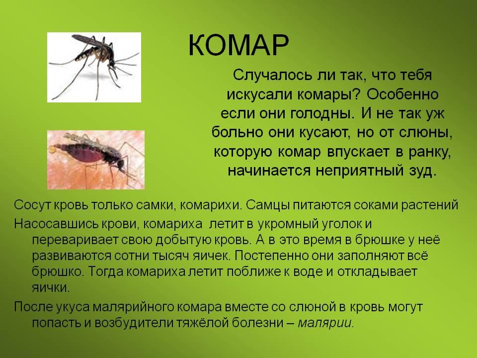 Зожник |   7 причин, почему комары кусают намного чаще некоторых людей