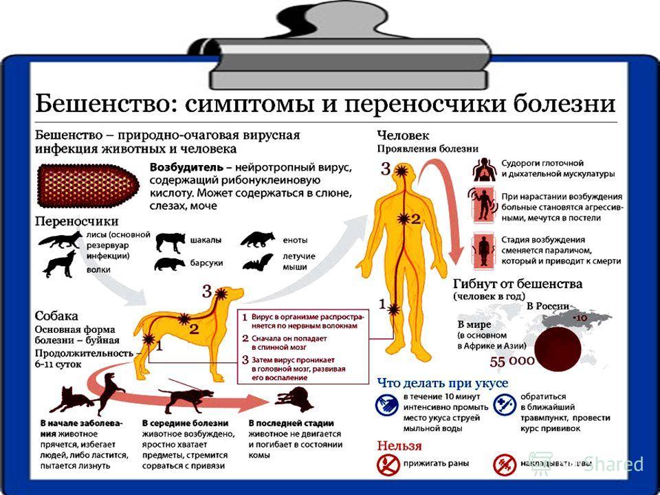 Как и почему крысы нападают на людей
