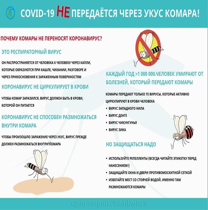 Передается ли гепатит через укус комара, какие болезни переносят?