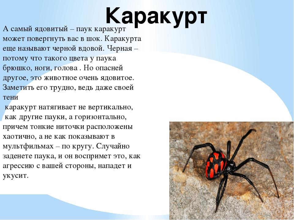 Пауки средней полосы России, юга и Сибири, есть ли ядовитые?
