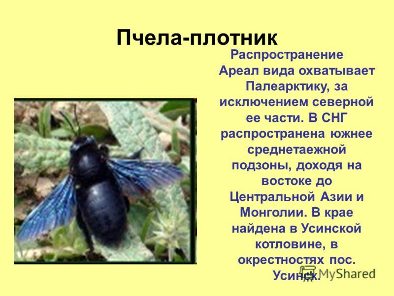 Пчела плотник: описание насекомого, места обитания, жизненный цикл, фото