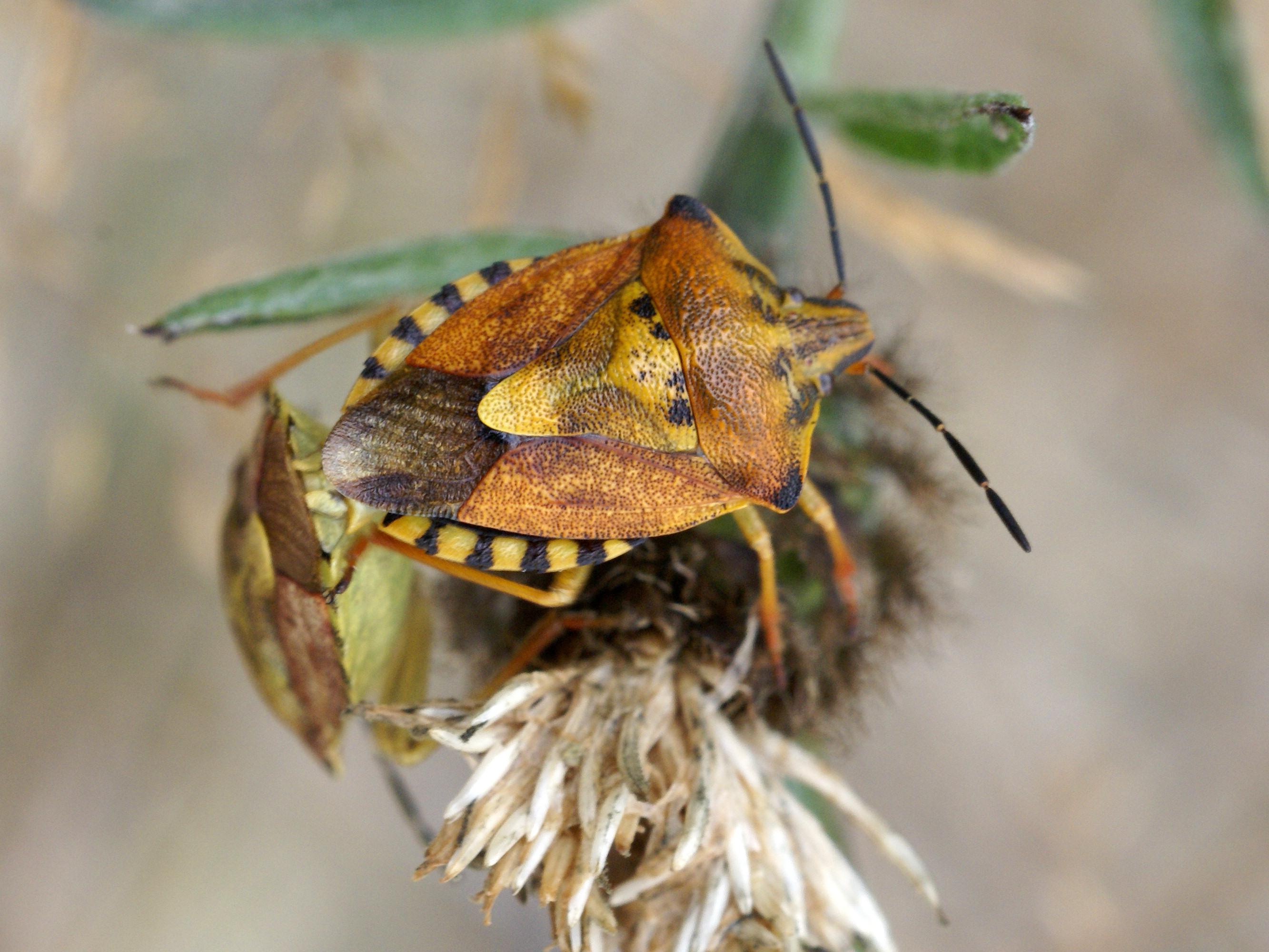 ❶ лесные клопы: фото-обзор и описание насекомых, какие бывают, где живут и как избавиться?