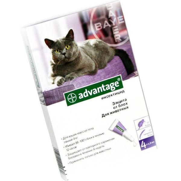 """Капли от блох """"адвантейдж"""" для кошек - инструкция и противопоказания"""