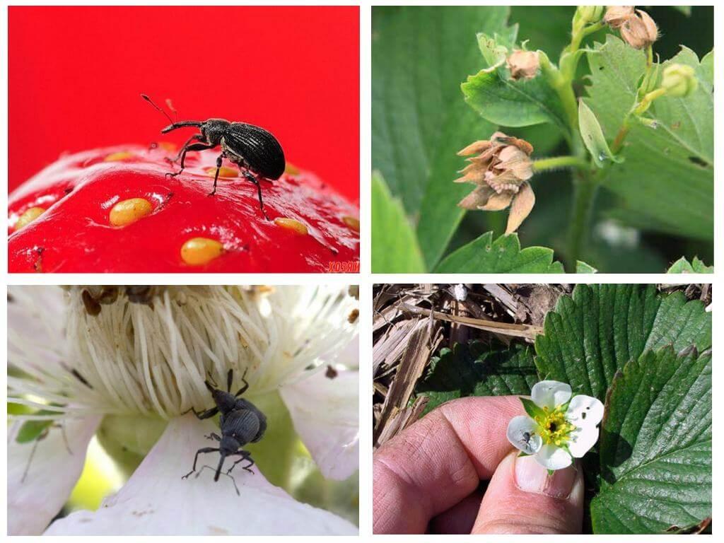 Как избавиться от муравьев на клубнике: какие народные средства помогут - etocvetochki.com