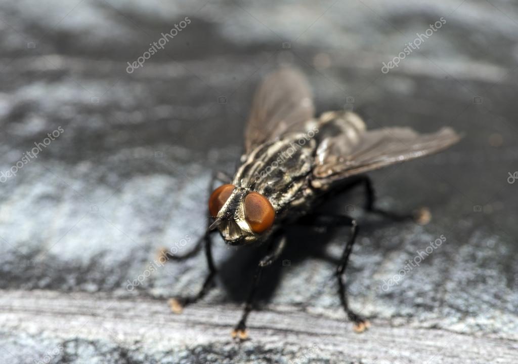 Чем питаются мухи в доме – чем кормить муху?:) — запись пользователя юля (ulashk) в сообществе домашние животные в категории наши любимцы!