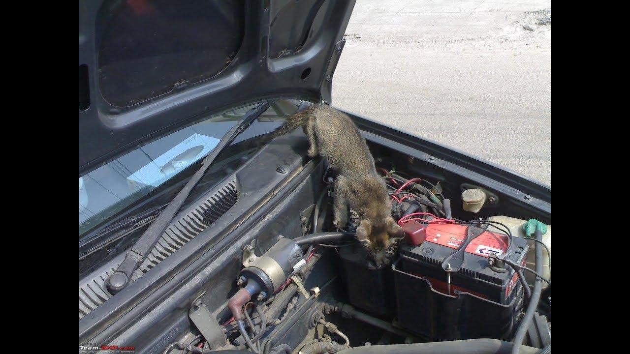 Грызуны в автомобиле: как избавиться от мышей в машине